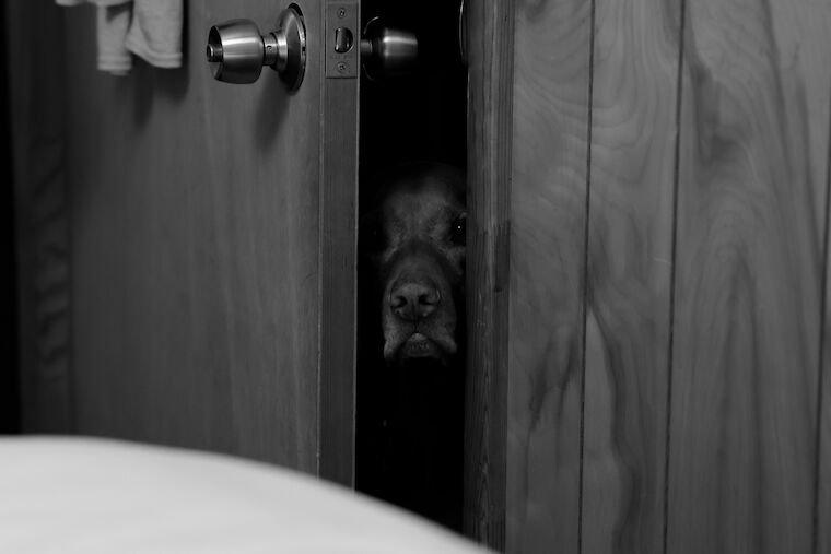 May I Come In?